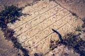 A centipede crawls over an ancient latin inscription at Jerash, Jordan.